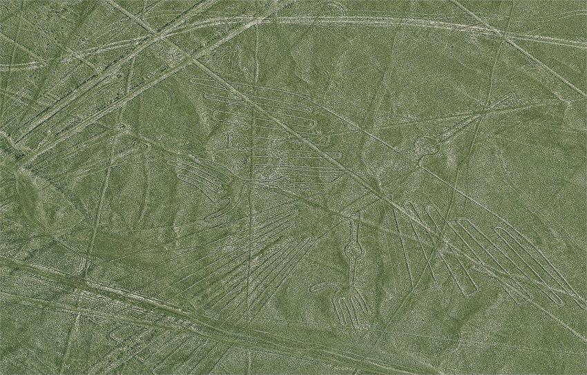 Condor, Nazca Lines