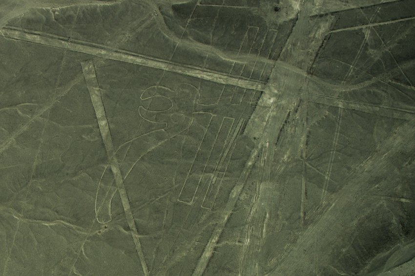 Parrot, Nazca Lines
