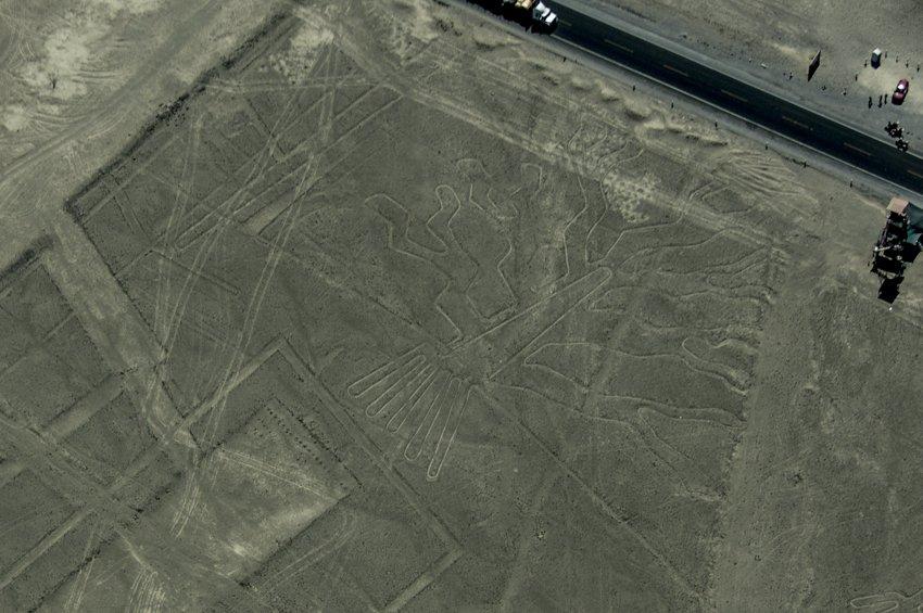 Seaweed, Nazca Lines
