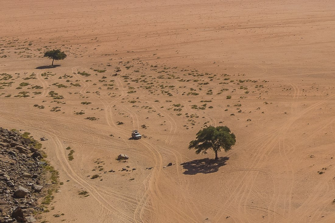 Lonely tree by Lawrence Spring, Wadi Rum