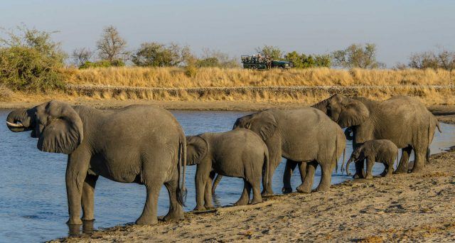 Elephants coming to the dam for a drink