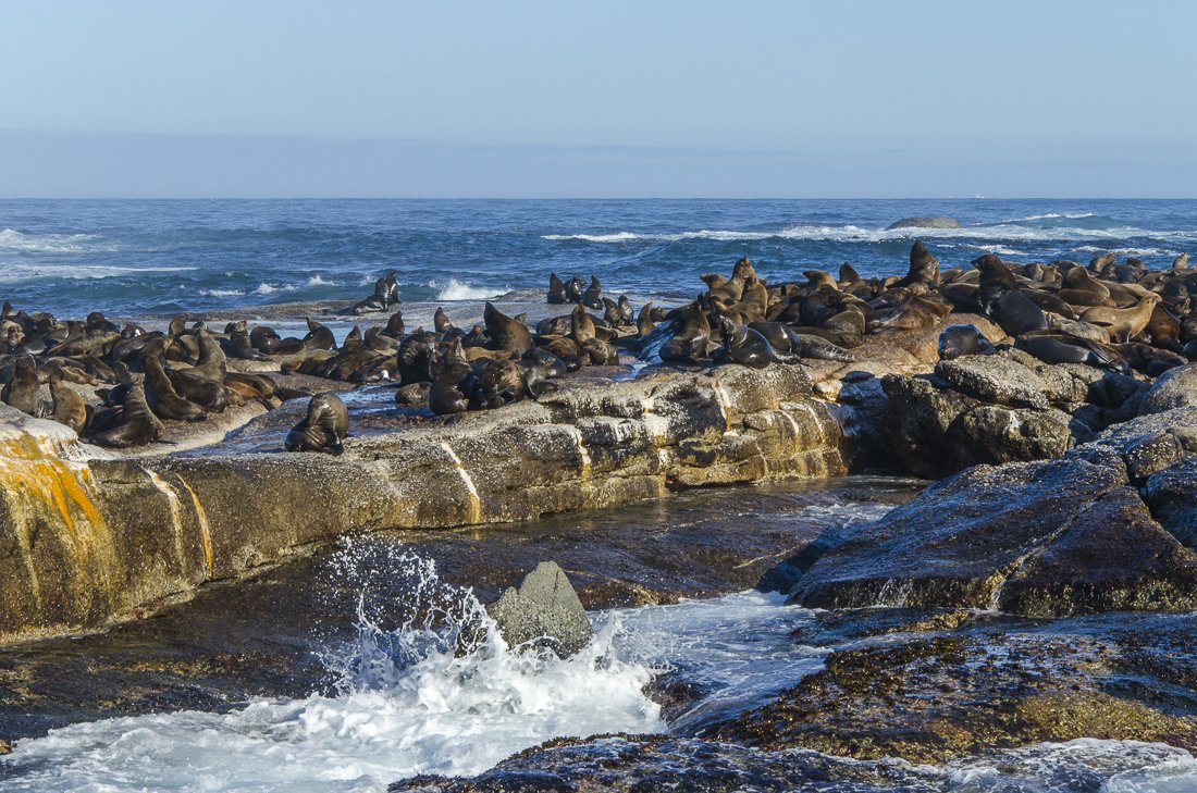 A quick boat ride to visit the seals at Hout Bay, South Africa